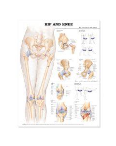 Anatomical Chart Series